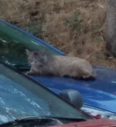 Wild Cat at Russian River