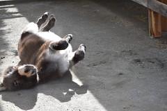 donkey dirt bath