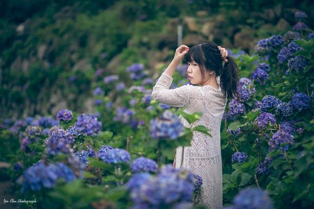 竹子湖繡球花外拍