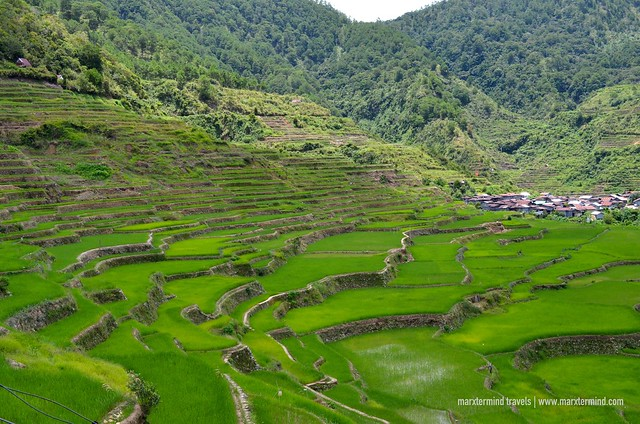 Maligcong Rice Terraces Bontoc
