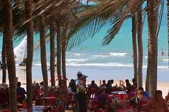 Barraca Da Lua Restaurante e área da barraca à sombra do coqueiral