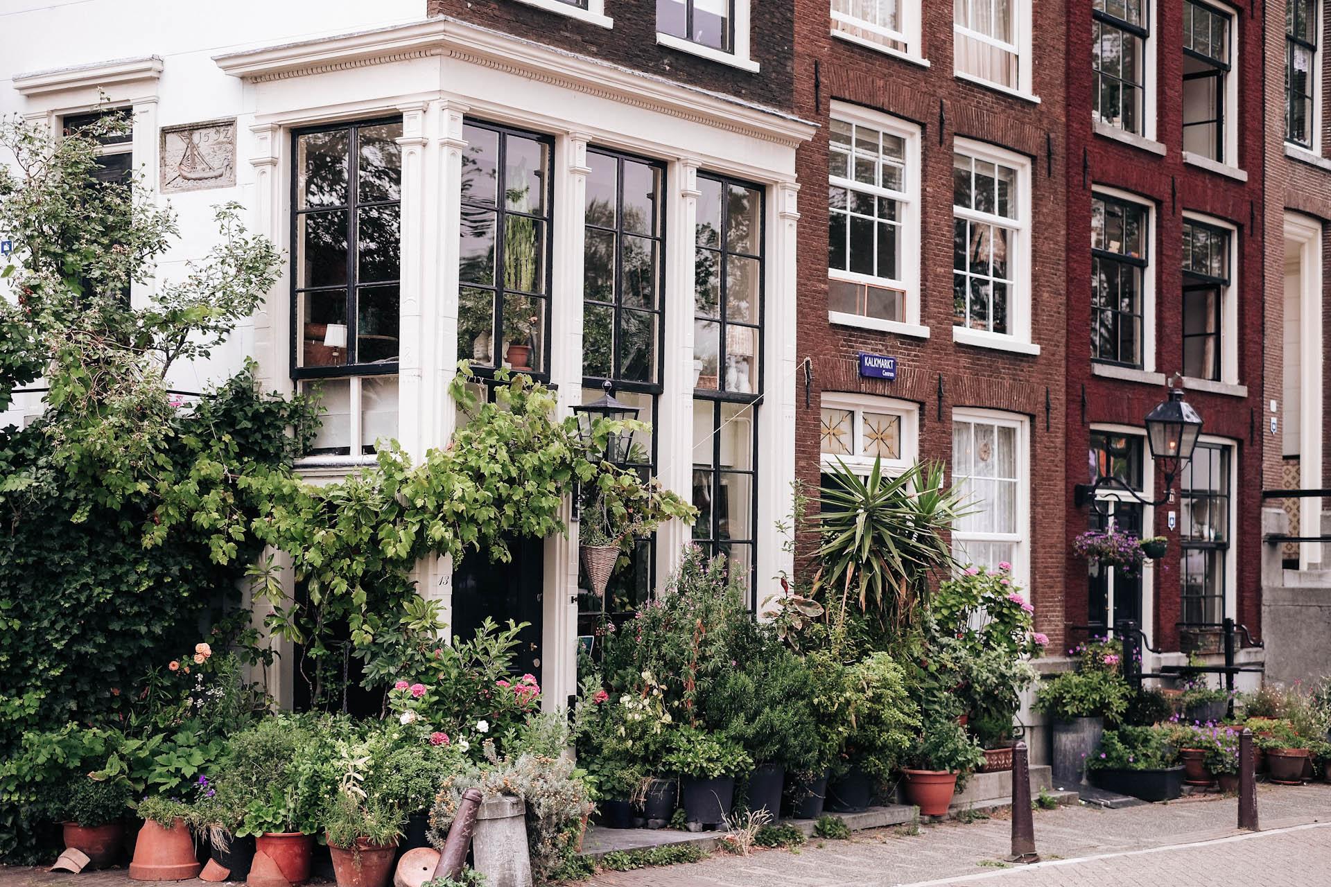 Amsterdam, In Bloom