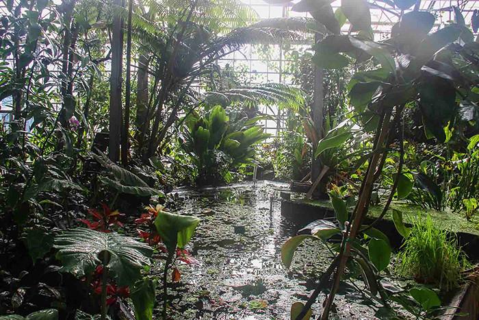 Utrecht-Botanische-Tuinen-1
