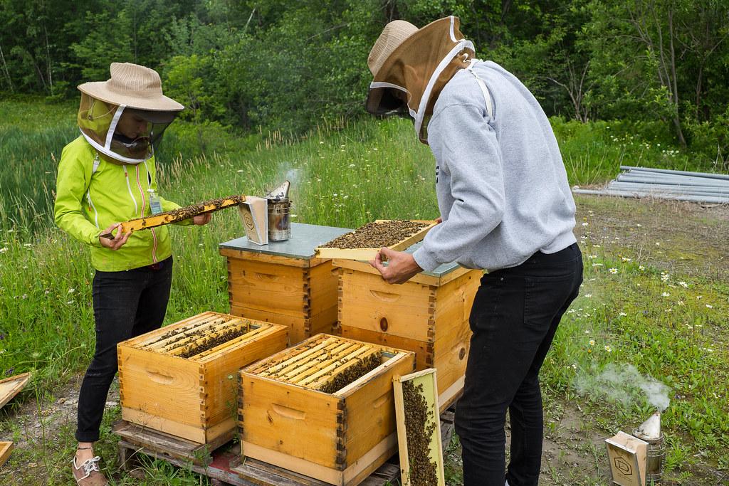Petite visite de nos ruches 35887837285_230f736c26_b