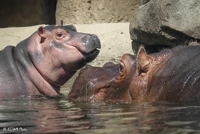 Cincinnati Zoo 6-16-17-3864