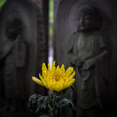 Temple flower offering