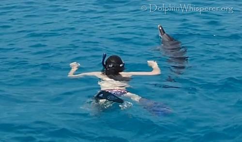 Noonan-Daniels family dolphin trip Bimini (1)