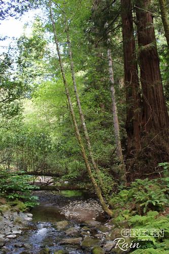 170528d Miur Woods _050