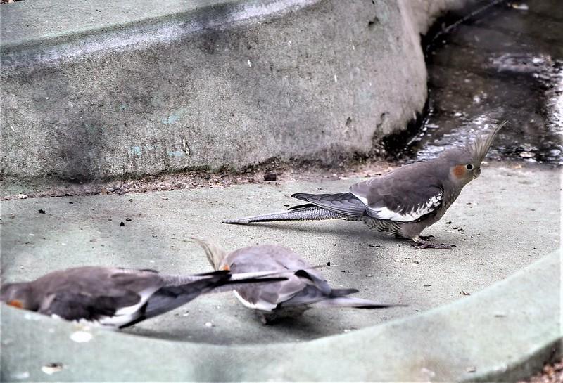 Aviary Solothurn 14.07 (15)