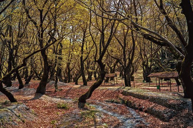 Peloponnese, Planitero