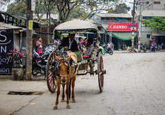 Horse cart running on the rural road