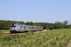 En Voyage dans les vignes - Photo of Réaux