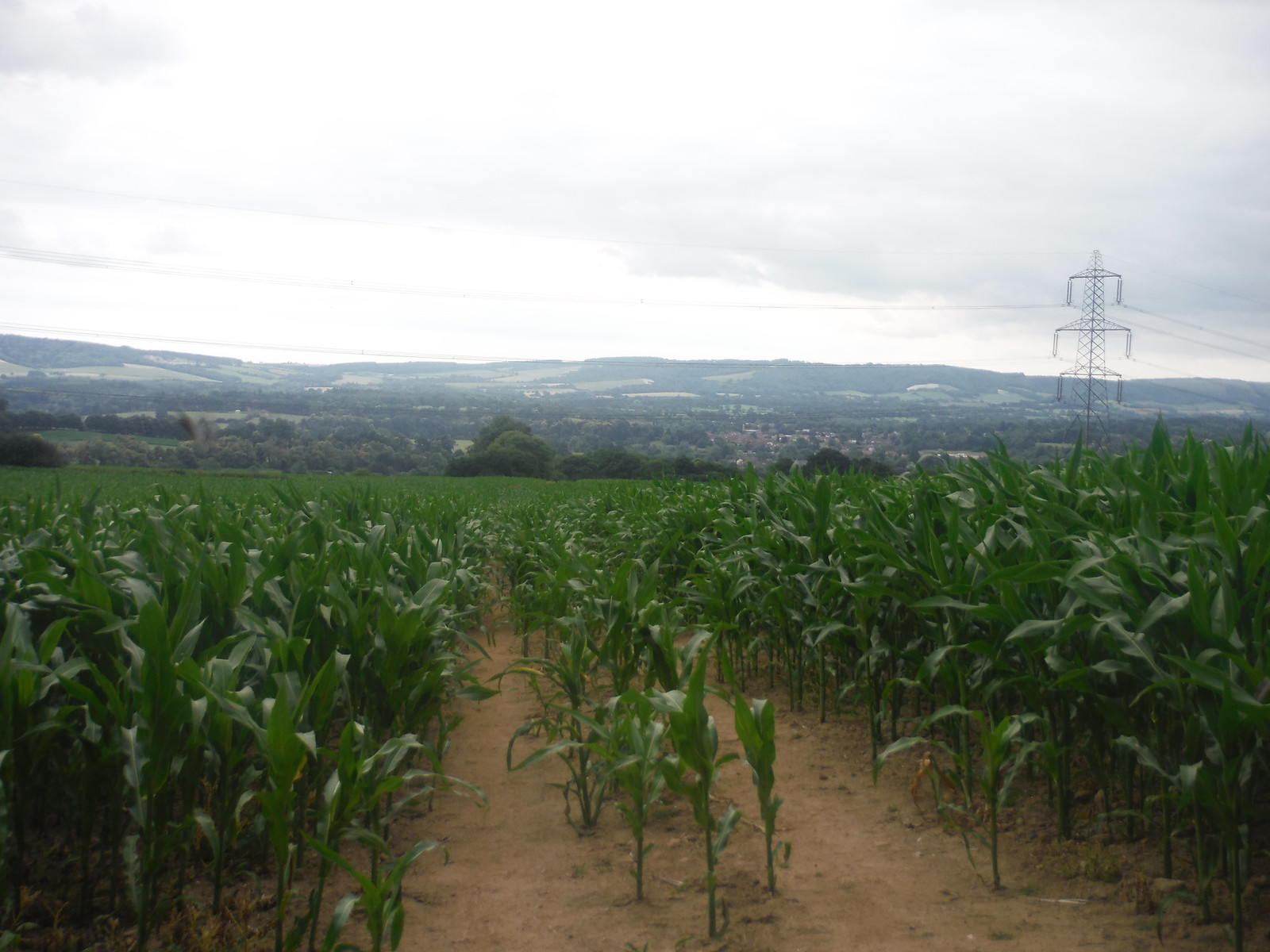 Arable Fields & Pylons? Essex? No: West Sussex! Approching Easebourne SWC Walk 218 Haslemere to Midhurst (The Midhurst Way)