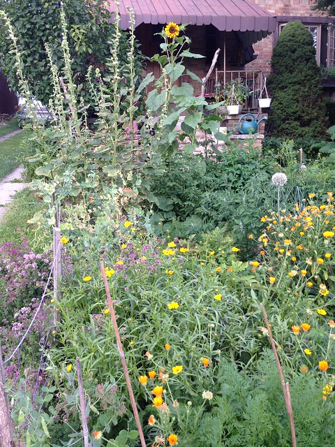 More polyculture