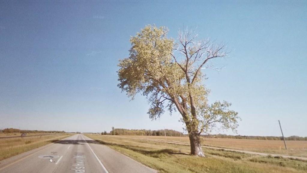 Halfway Tree, Manitoba. #ridingthroughwalls #xcanadabikeride #googlestreetview