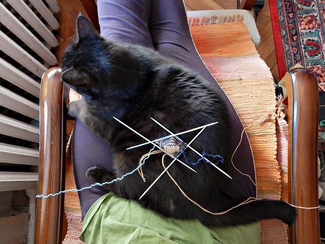 кот и вязание | cat and knitting