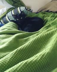 Hi! I kicked out @neelixthebengal and took his spot. Hope you don't mind. #blackcat #blackcats #cat #cats #kitty #kittycat #kittygram #blackcatsofinstagram #exferal #queencat #catsofinstagram #catsagram #?? #?? #? #neko #kuroneko #?? #???? #????