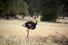 DSC06504 - NAMIBIA 2017