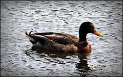 2015-01-09_P1092839_Lake Chautauqua Park,Clearwater,Fl_JPG