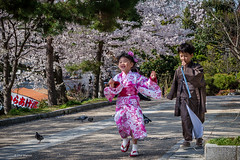 Frolicking under the cherry trees - Sakura in Kyoto, Japan