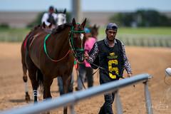 Lone Star Park Horse Racing