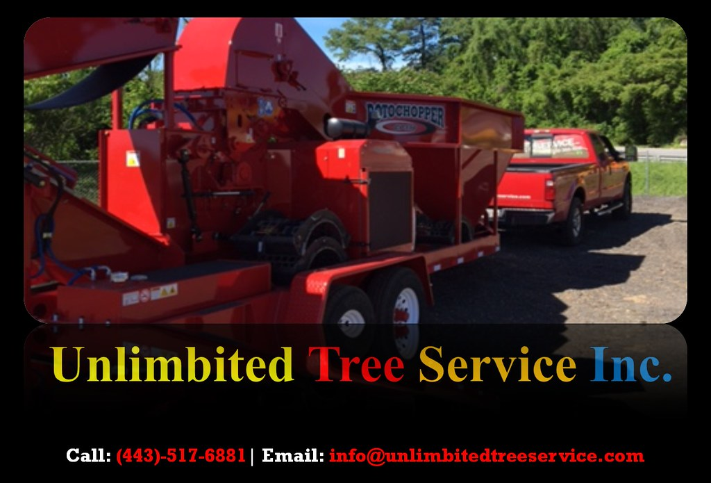 Tree Stump Removal and Tree Trimming Service in Millersville, MD