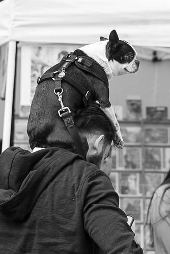 pdx oregon portland monochrome bw shoulder over dog