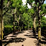 Rosengarten im Fort X