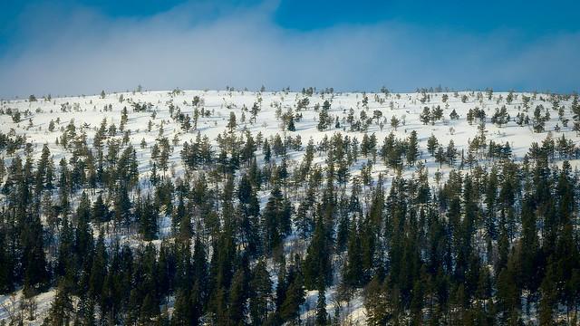 Sälen mountains, Nikon D610, Sigma 150-600mm F5-6.3 DG OS HSM | S