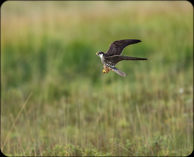 Hobby, Canon EOS 7D MARK II, Canon EF 500mm f/4L IS