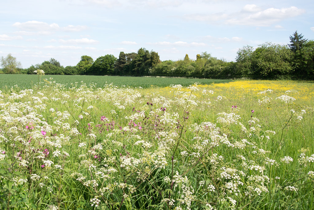 Spring Meadow Princes Risborough to Great Missenden