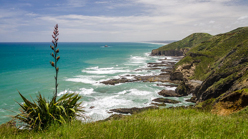 kirikiribay oaiaisland tasmansea bay cloud flax grass island nature ocean outdoor plant rock sky wave piha newzealand