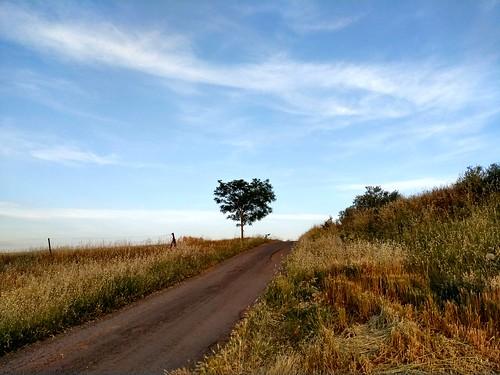 Camino a Aldea del Rey