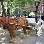 WTC Horses