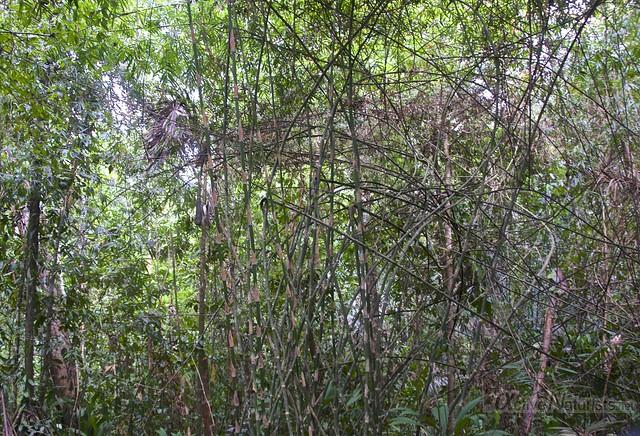 view 0003 Corcovado, Osa peninsula, Costa Rica