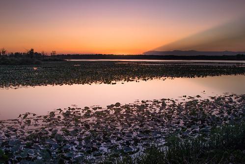 canoneos5dmarkiv lily pad pads lake flooding kawkawlin midland centralmichigan mi midmichigan sundown atardecer dam reflections pond shadow cloudbank evening twilight