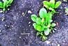 #garden #brightgreenthumb