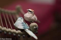 Paper Birds I