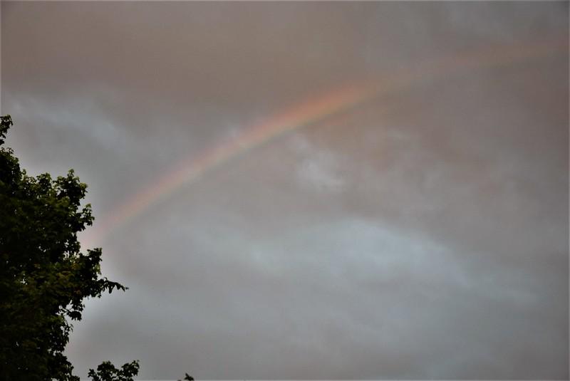 Rainbow 20.05 (4)
