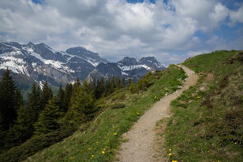 m2404284 rangefinder messsucher leica leicam mp typ240 28mm elmaritm12828asph hiking wanderung randonnée escursione trail wanderweg sentiero engelbergertal alps alpen zentralalpen zentralschweiz nidwaldnerhöhenweg switzerland schweiz suisse svizzera svizra europe landscape landschaft frühling spring ©toniv 2017 170527 nidwalden