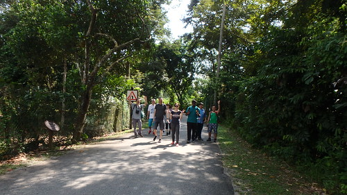 Discover Ubin walk with Strix Wildlife Consultancy, Pesta Ubin 2017
