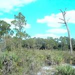 arbors-preserve