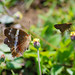 butterfly and moth por ikarusmedia