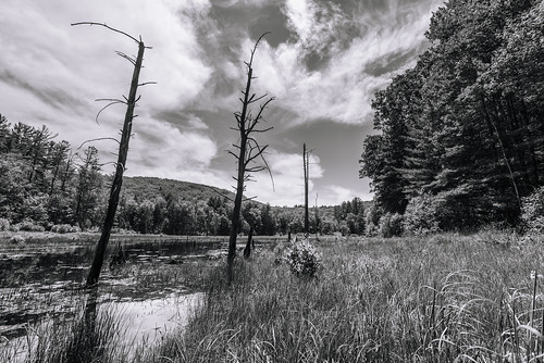 madamesherriforest madamesherricastle madamesherrispond pond water landscape blackandwhite monochrome bw westchesterfield chesterfield newhampshire nh unitedstatesofamerica usa nature nikon d610 1635f4vr fav10