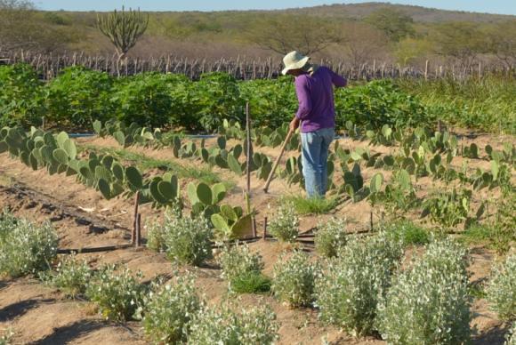 Além da MP 759, a 756 e 758 visam beneficiar o mercado de terras, especialmente a expansão das fronteiras agrícolas - Créditos: Agência Brasil / Site