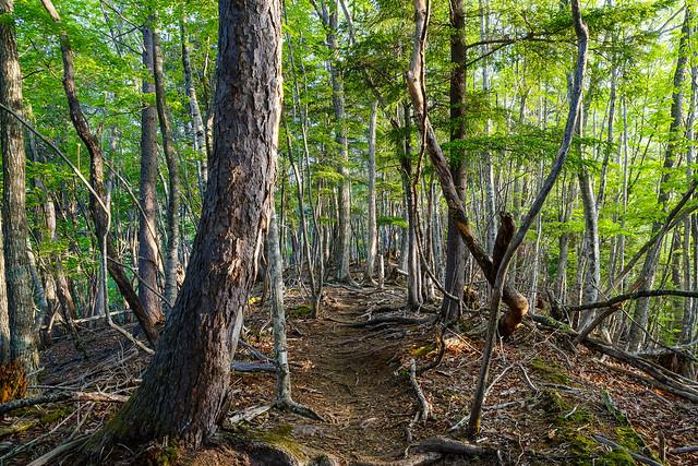 雰囲気の良い樹林の尾根