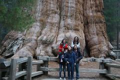 Sequoia (32)