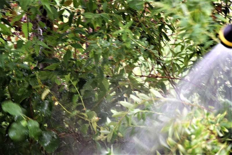 Watering the garden 31.05 (1)