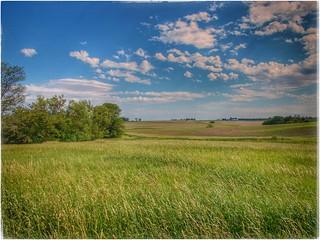 Central Illinois Prairie