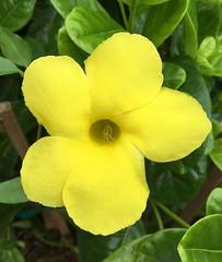 018e ~ Yellow